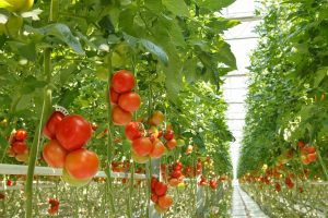 Vivero en Holanda de agricultura intensiva
