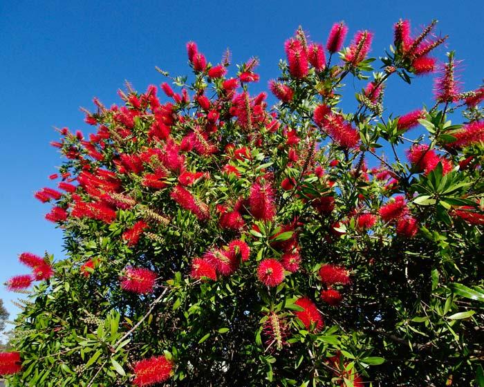 planta resistente al calor con flor