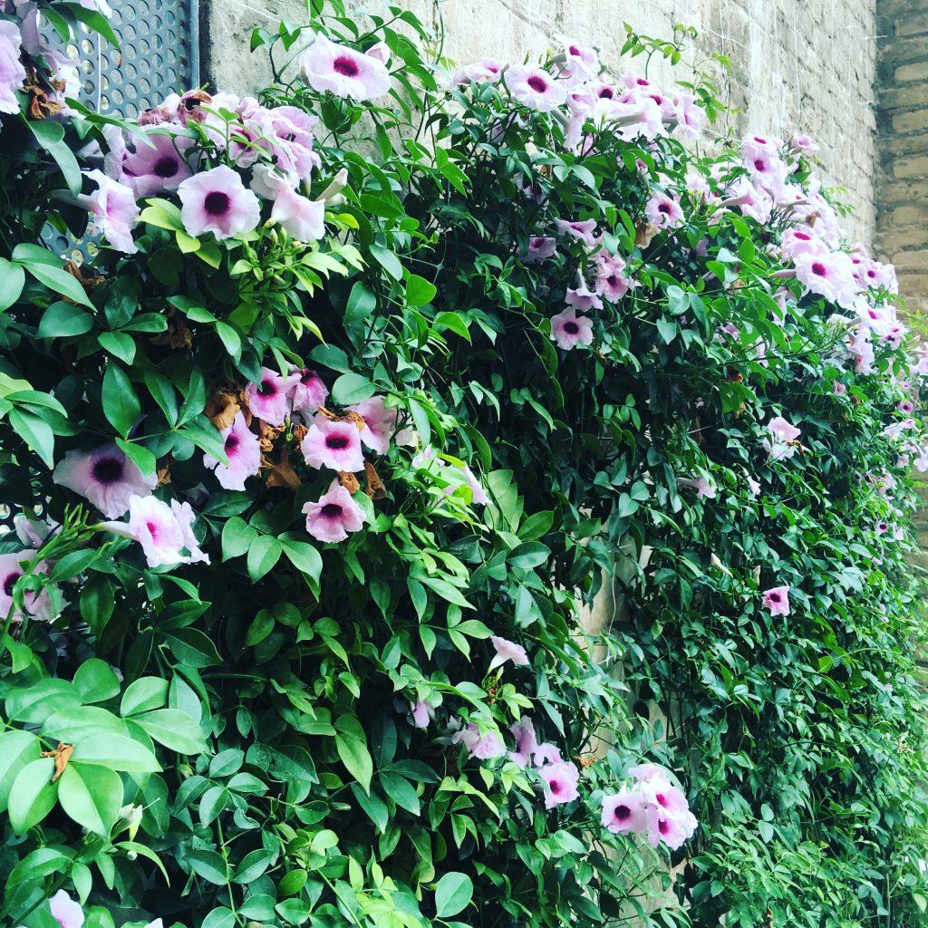 Planta de primavera con flor