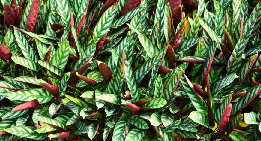 Plantas de interior que necesitan poca luz plantesdecor - Plantas de interior que no necesitan luz ...
