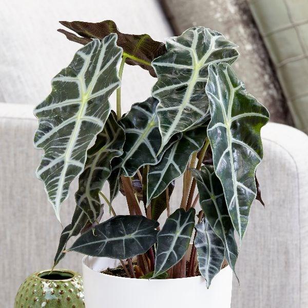 Plantas de interior que necesitan poca luz plantesdecor - Plantas de interior que necesitan poca luz ...