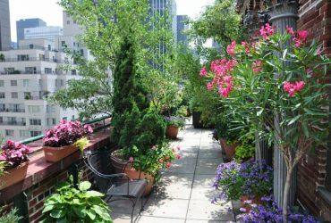 terraza plantas mediterráneas