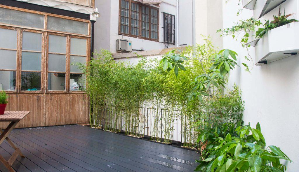 bambús en jardineras
