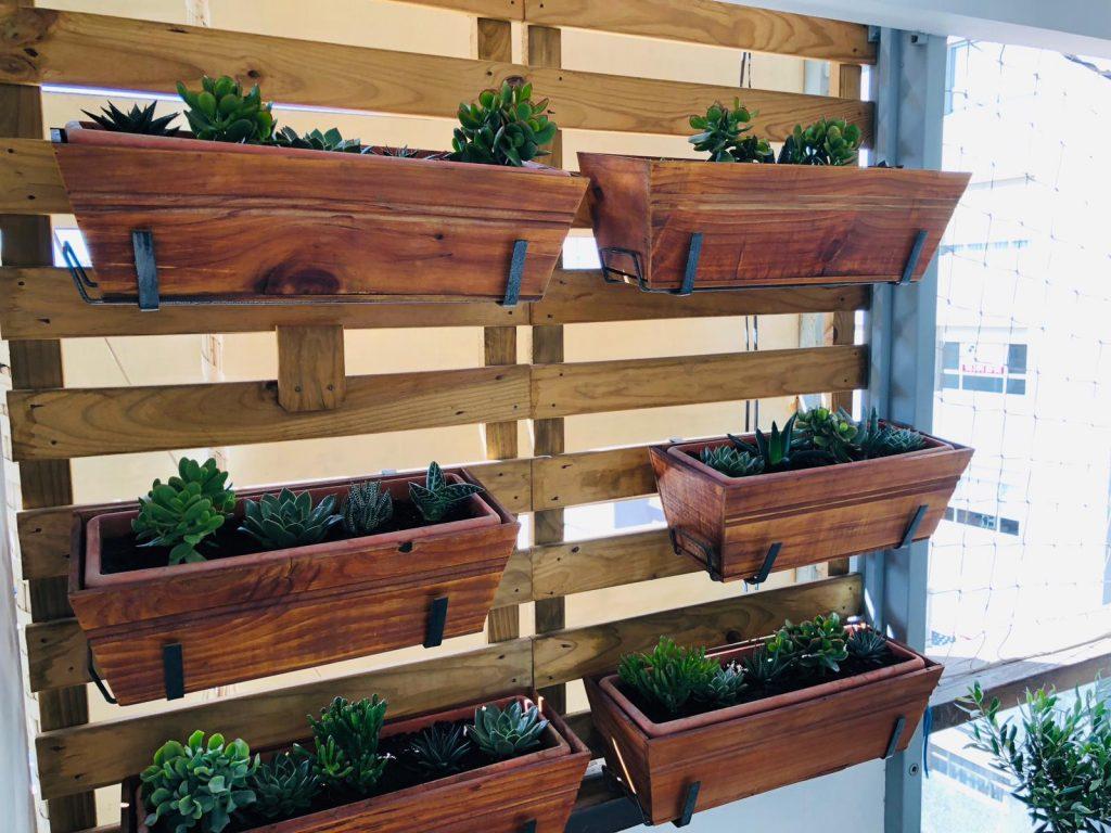 jardines verticales con plantas resistentes