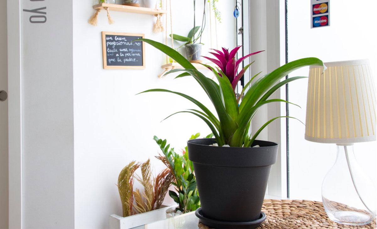 planta de interior decorativa