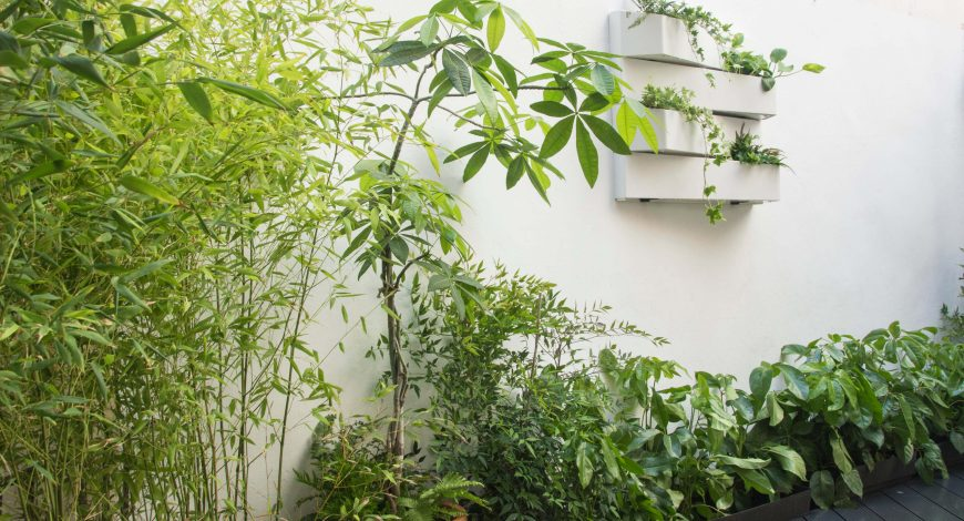 bambús y jardín vertical