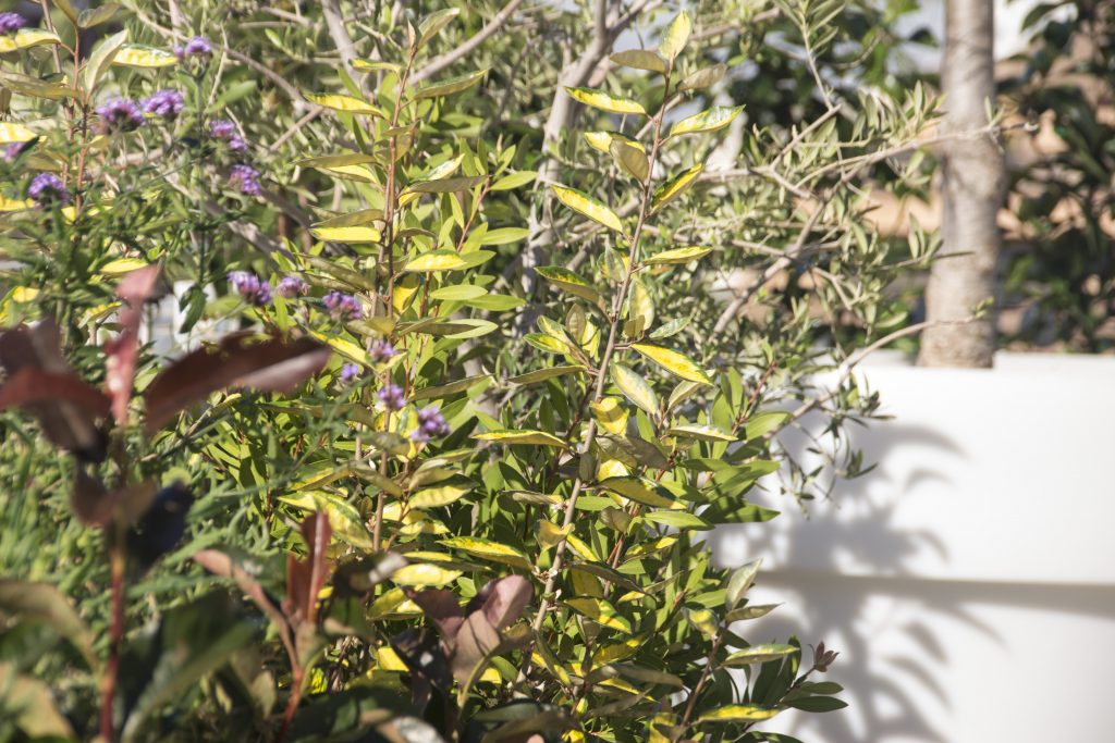 ático jardín 4