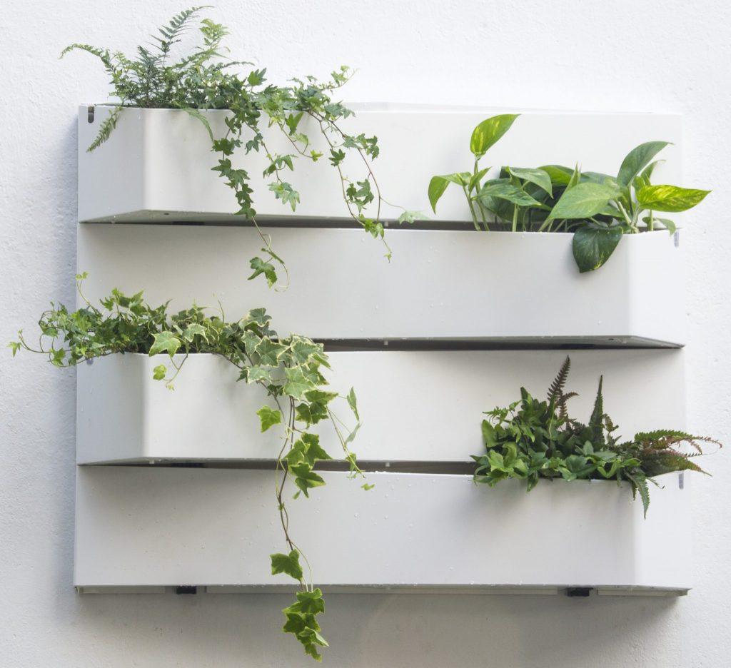 jardines verticales de diseño con plantas verdes
