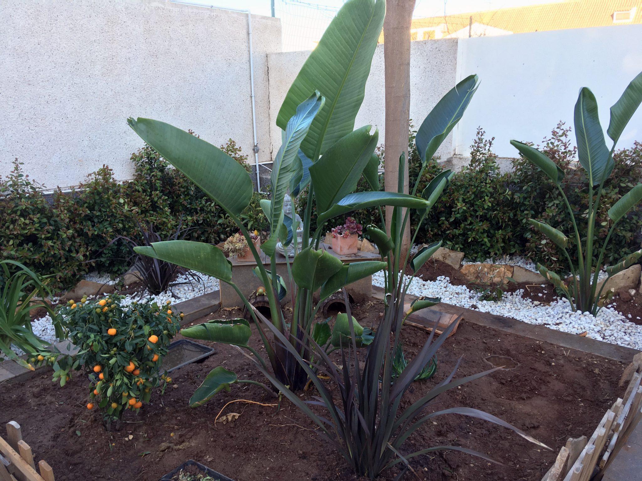 jardín con encanto con strelitzia en el centro