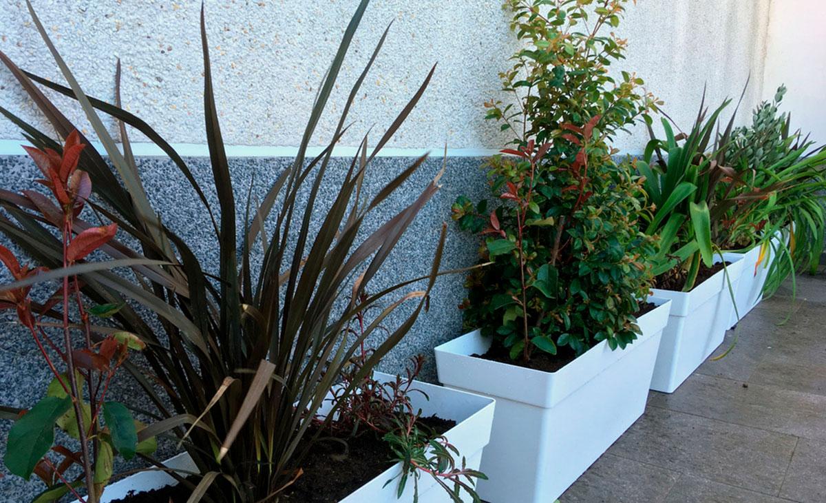 jardineras con arbustos