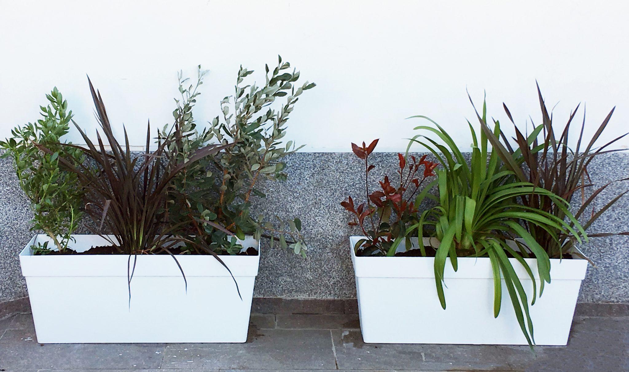 jardineras con plantas para jardín con encanto