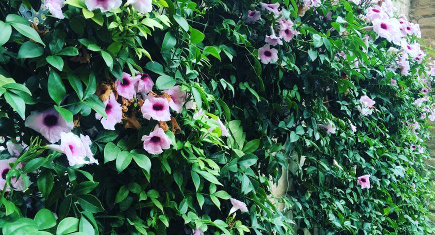 Planta en primavera con flor