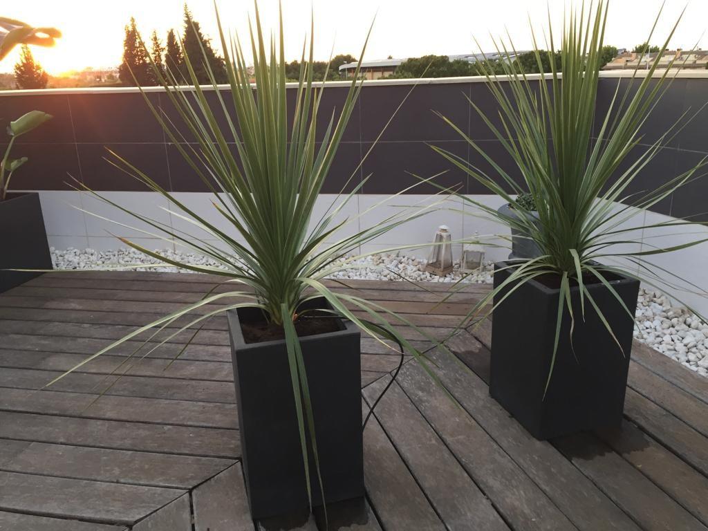 dracaenas en jardín tropical