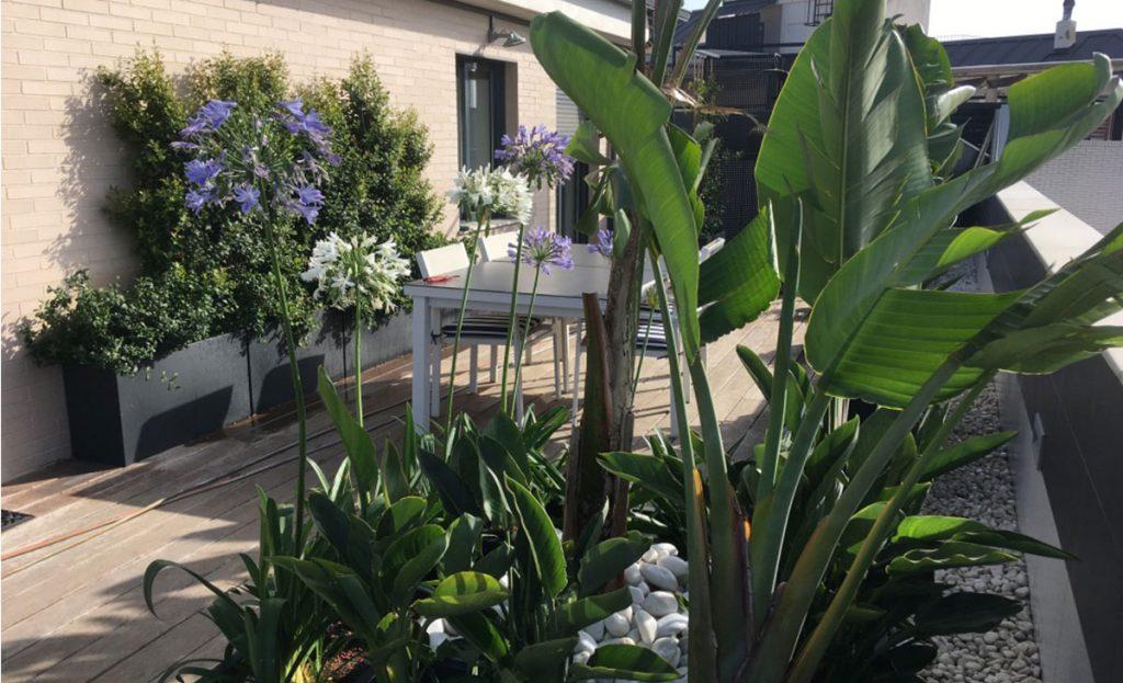 jardín tropical con flores