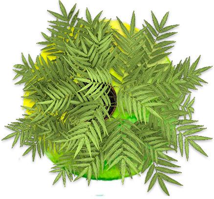 ilustración planta de interior