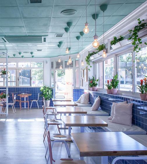 plantas decorando cafetería