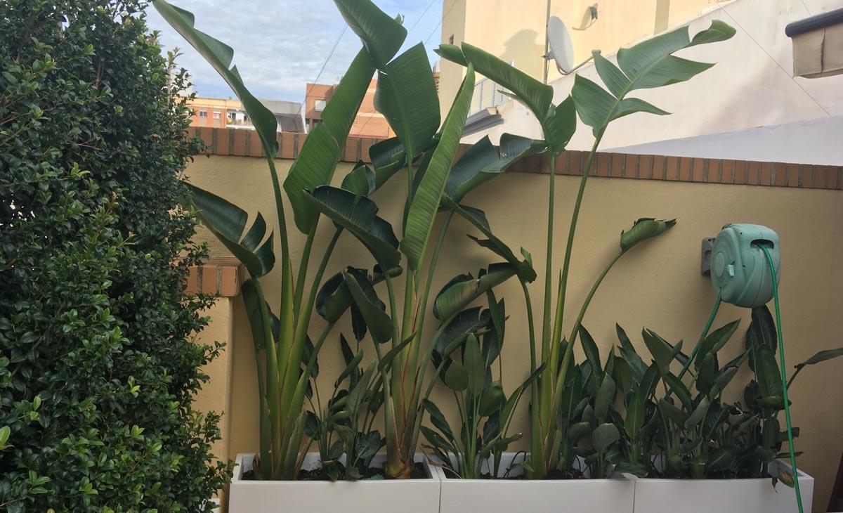 plantas tropicales en jardín con privacidad en la ciudad