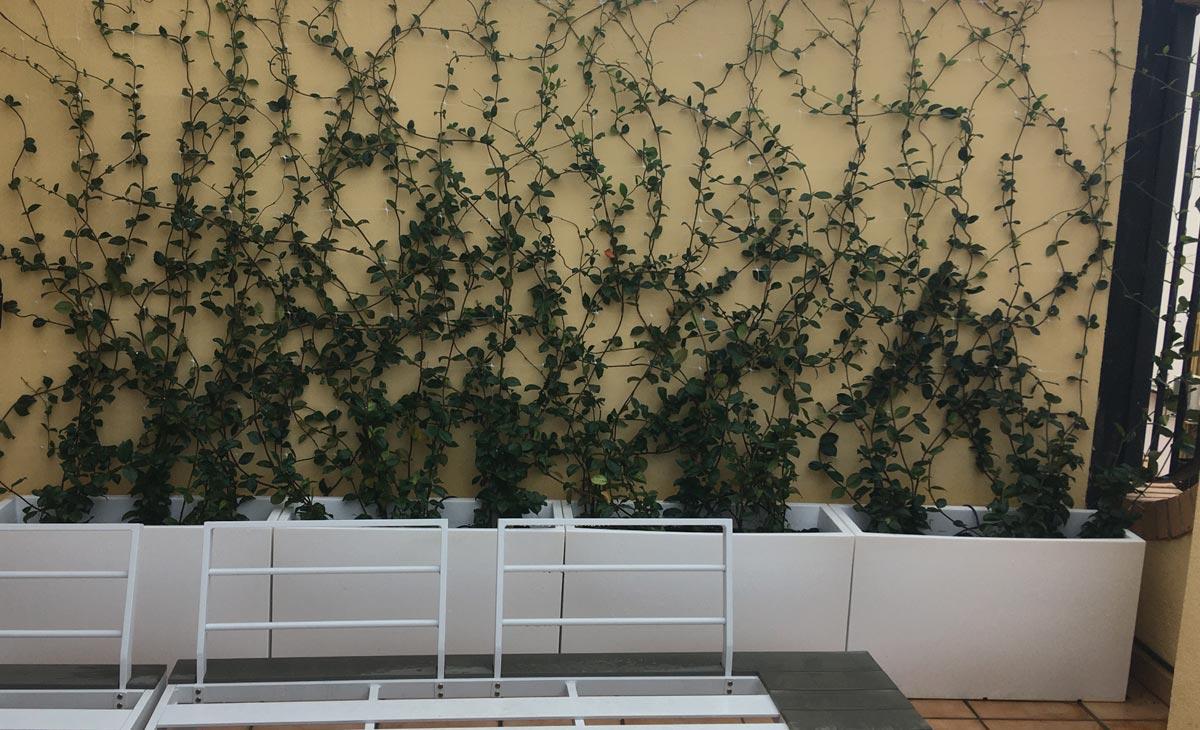pared con trepadoras en jardín con privacidad en la ciudad