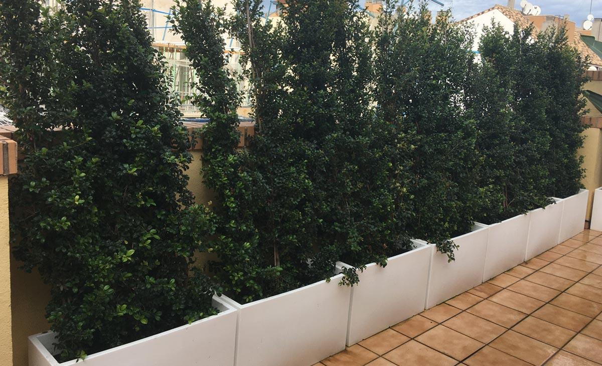 seto en jardín con privacidad en la ciudad