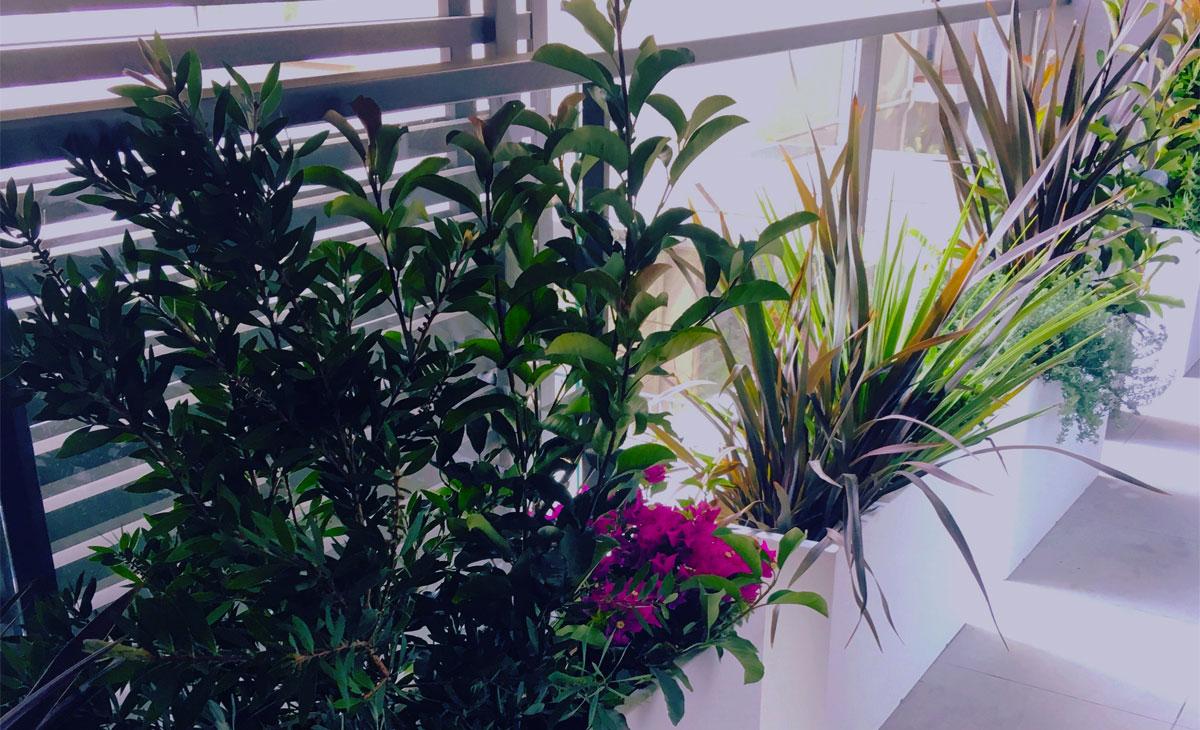 terraza pequeña con jardín