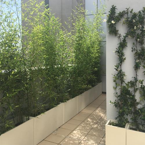 Terraza con bambú