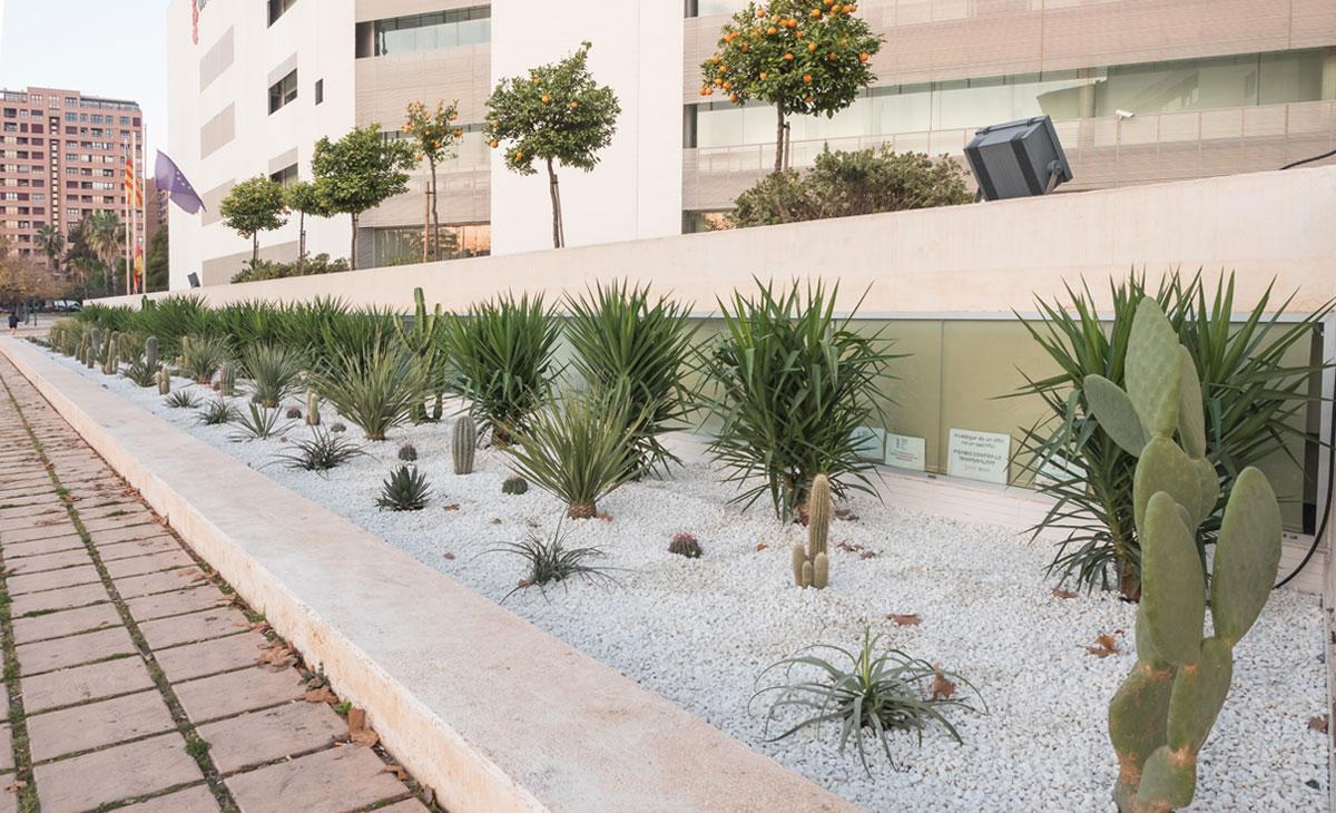 yucas y plantas de bajo mantenimiento