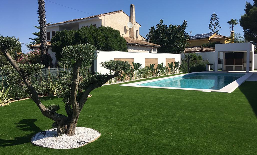 jardin con olivo