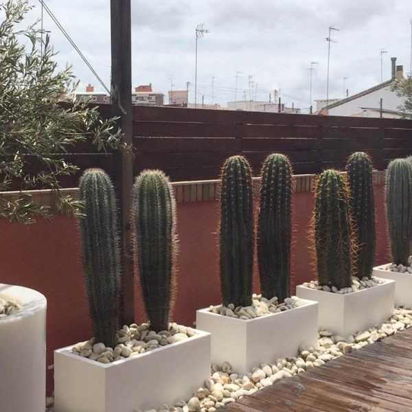 diseño terraza con cactus