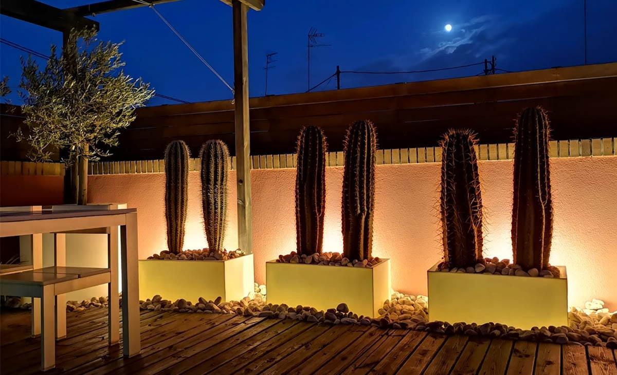 terraza de noche con cactus